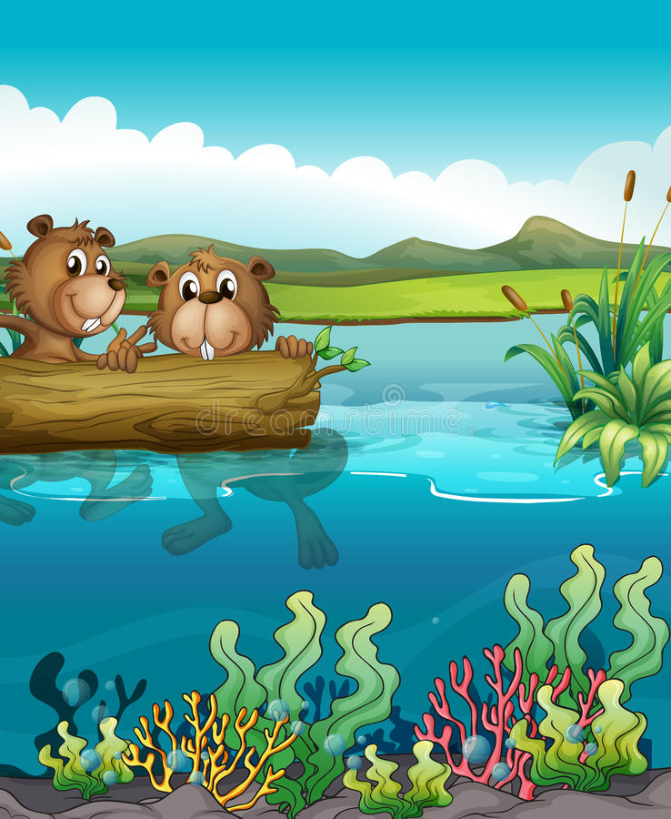Two beavers playing in the lake royalty free illustration
