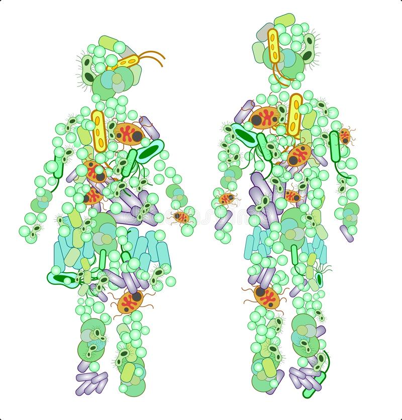Illustration of two figures made out of microbes. Illustration of two human figures and their microbiome - the bacterias they host vector illustration