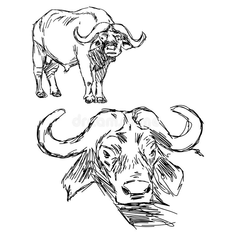 Free Illustration Vector Hand Drawn Of Cape Buffalo On Whit Royalty Free Stock Photo - 73483275