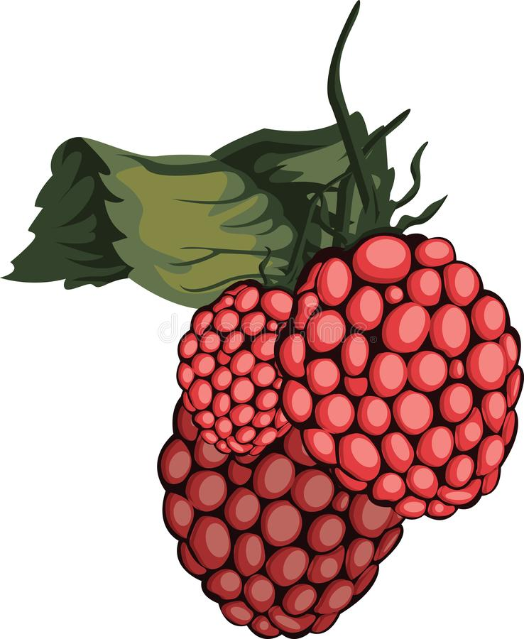 Illustration vectorielle du rasberry rouge à feuilles vertes illustration de vecteur