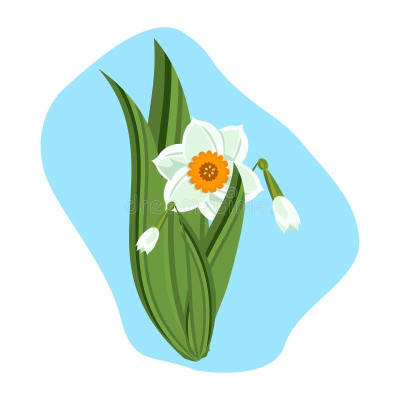 Illustration verte de vecteur d'usine de nature de belles jonquilles illustration stock
