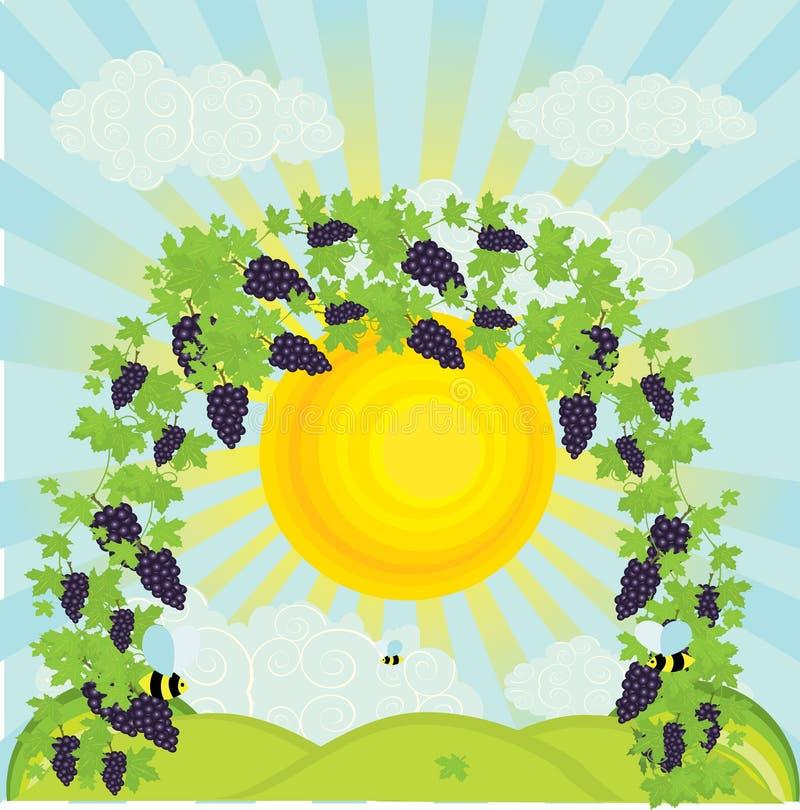 Download Illustration Of A Vineyard Stock Photos - Image: 15683613
