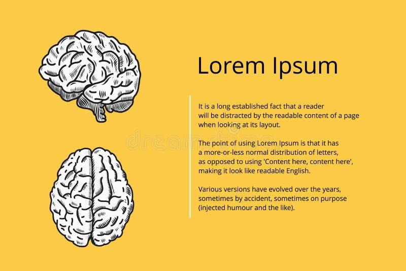Illustration vol 1 för vektor för hjärnhand utdragen Inrista stil Isolerat p? gul bakgrund stock illustrationer