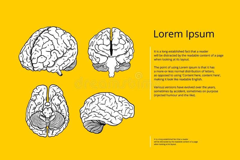 Illustration vol 4 för vektor för hjärnhand utdragen Inrista stil Isolerat p? gul bakgrund royaltyfri illustrationer