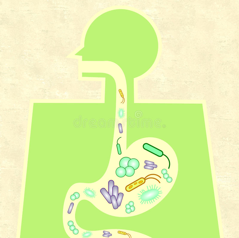 Illustration von Darm microbiome lizenzfreie abbildung