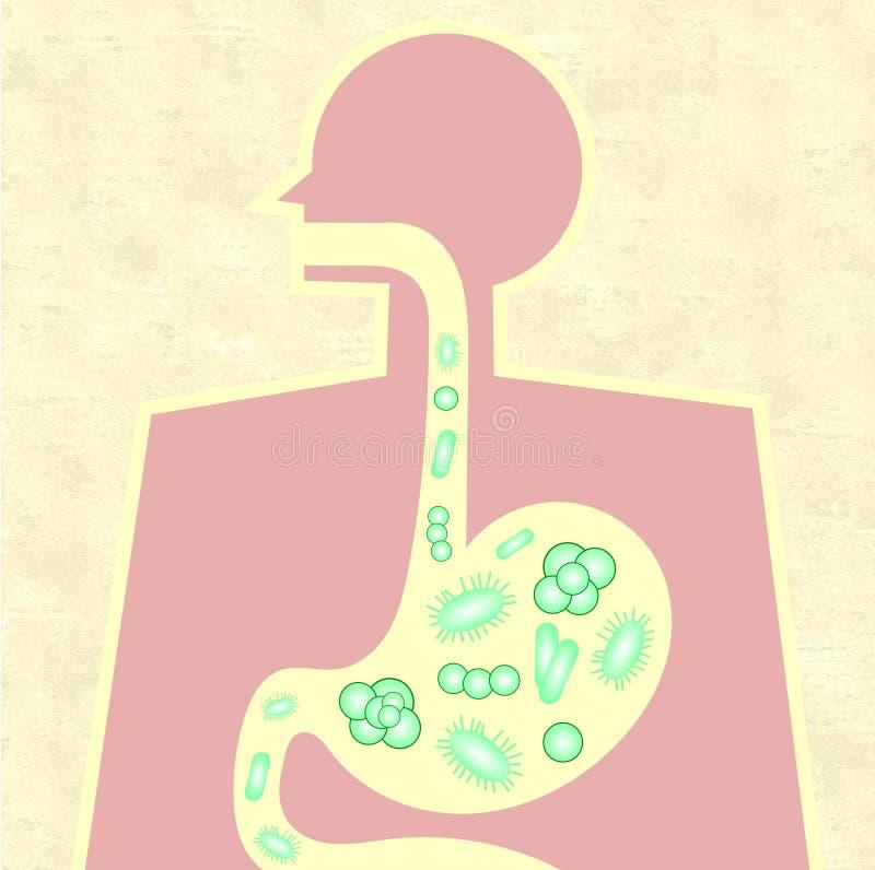 Illustration von Darm microbiome vektor abbildung