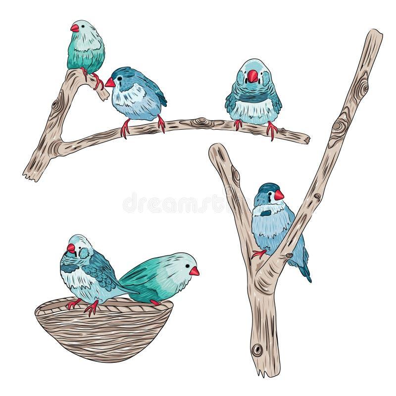 Illustration von den netten Vögeln, die auf Baumasten sitzen vektor abbildung