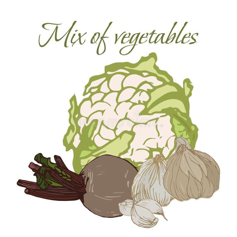 Illustration von geschmackvollen Veggies lizenzfreie stockfotografie