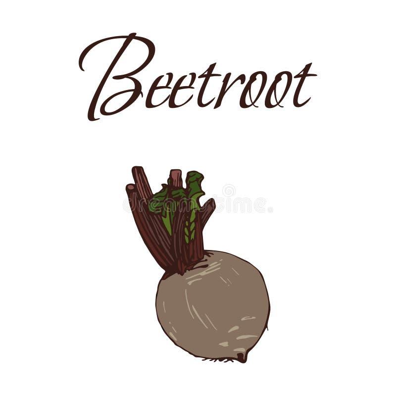 Illustration von geschmackvollen Veggies Vektor-Rote-Bete-Wurzeln lizenzfreie stockbilder
