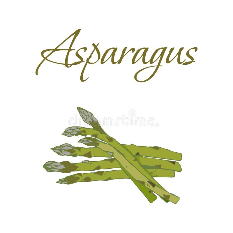 Illustration von geschmackvollen Veggies Vektorspargel lizenzfreies stockbild