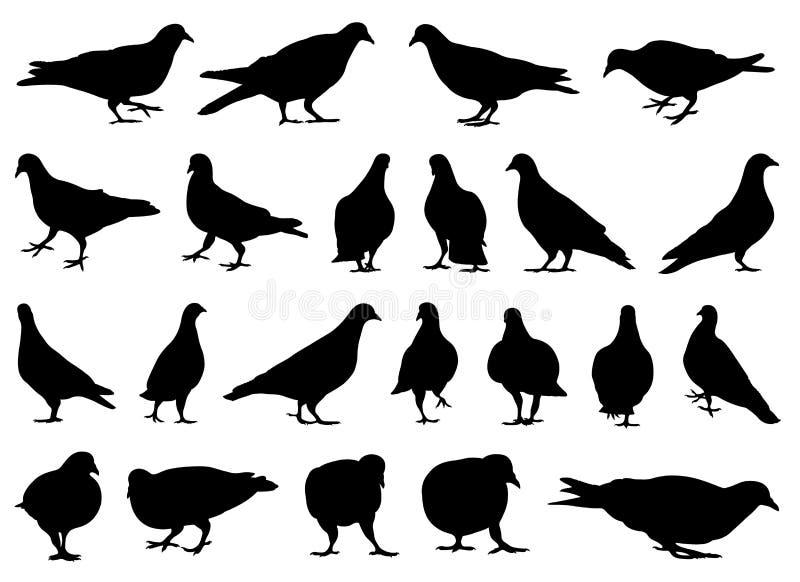 Illustration von verschiedenen Tauben stock abbildung