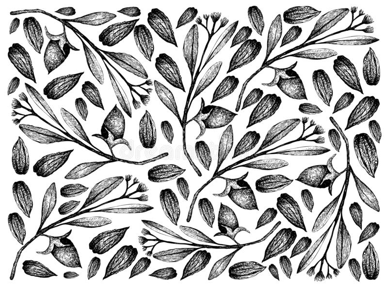 Hand Drawn of Jojoba Nuts and Seeds Background. Illustration Wallpaper of Hand Drawn Sketch Simmondsia Chinensis or Jojoba Nuts and Seeds Background, Used to royalty free illustration