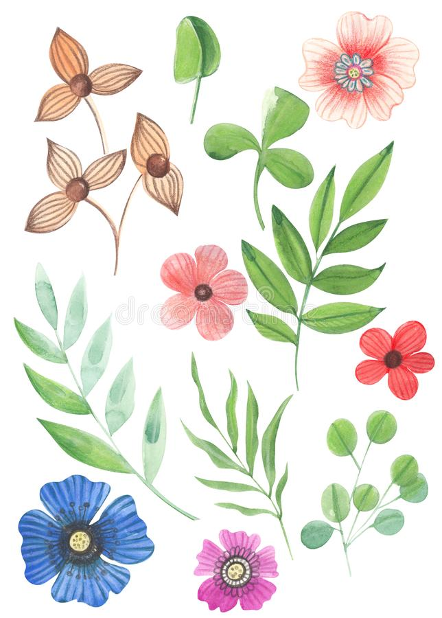 Illustration of watercolor drawing color set of wild flowers with leaves on an isolated background stock photo