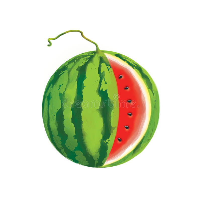 Download Illustration Of A Watermelon Stock Illustration - Image: 25359528