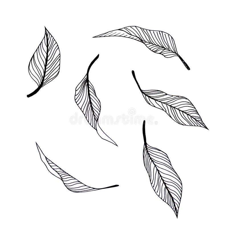 Free Illustration With Graphic Leafs. Nature Design Elements Stock Image - 143911811