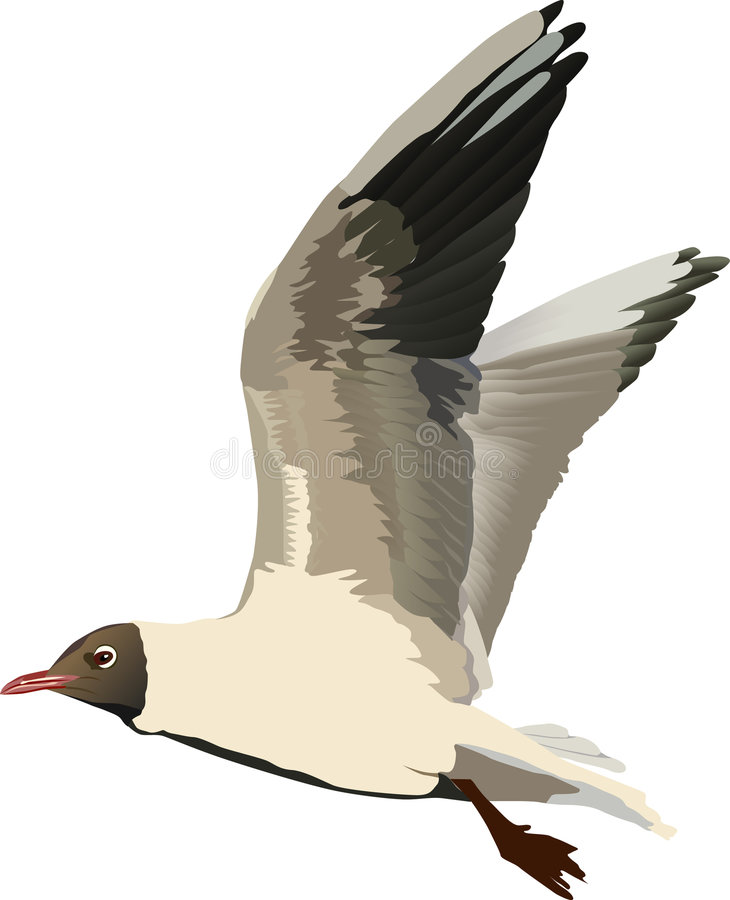 Free Illustration With Gull Stock Image - 6400921
