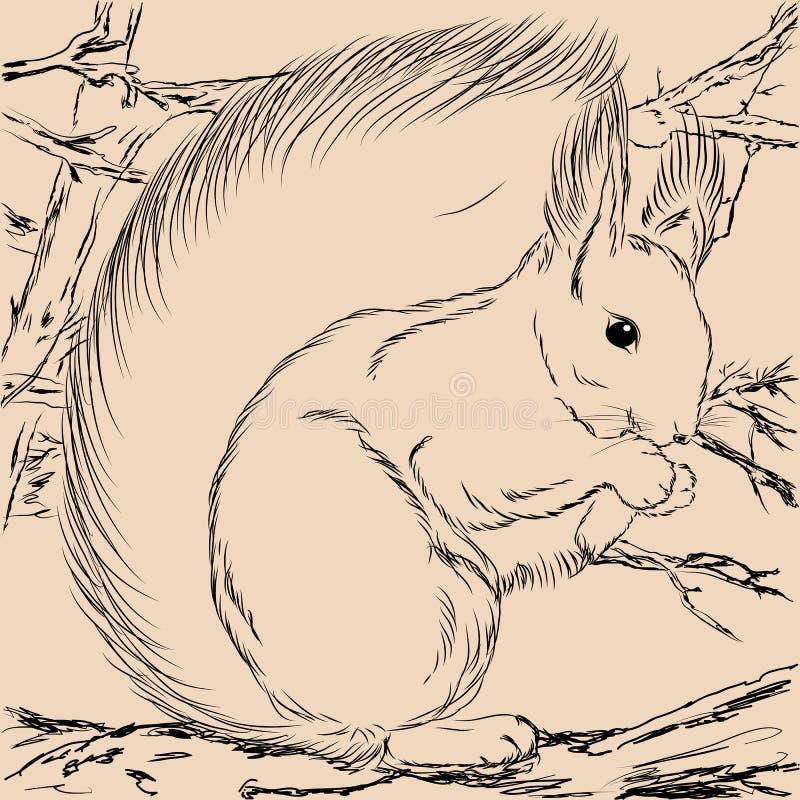 Illustrationekorre Forest Wild vektor illustrationer