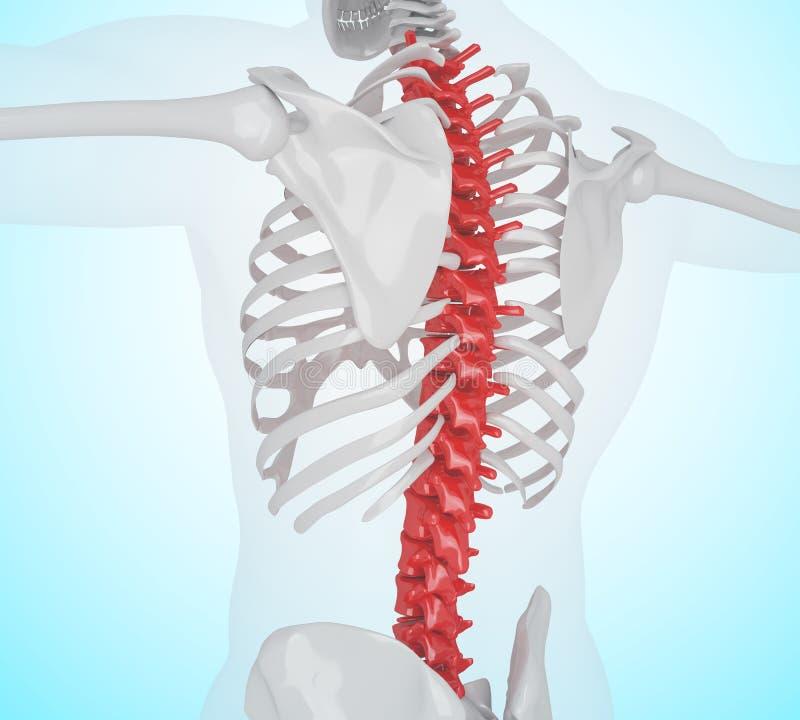 illustrationen 3d av mänskligt skelett- tillbaka smärtar vektor illustrationer