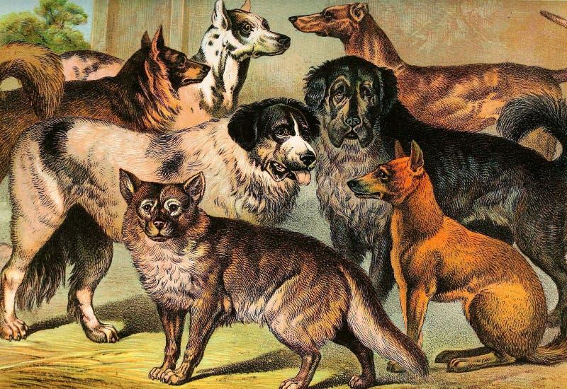 Illustrationen des Tieres lizenzfreie abbildung