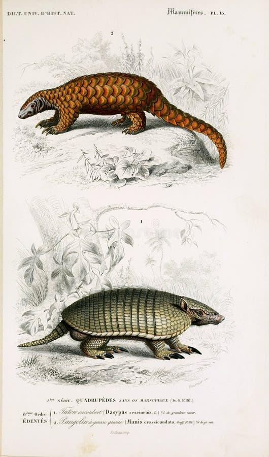 Illustrationen des Tieres lizenzfreie stockfotos