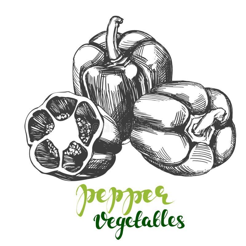 Illustrationen för vektorn för uppsättningen för pepparklockagrönsaken handen skissar den realistiska drog vektor illustrationer