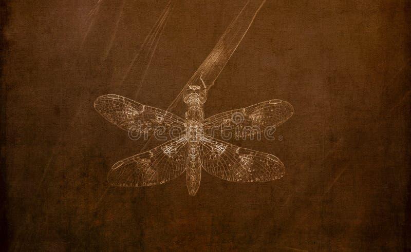 Illustrationen i Sepia av en östlig Amberwing sländaPerithemis tenera sätta sig på gräs arkivbild