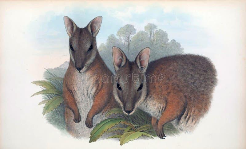 Illustrationer av djuret stock illustrationer