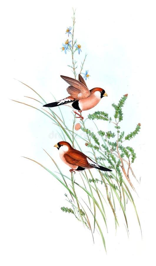 Illustrationer av djuret royaltyfri illustrationer