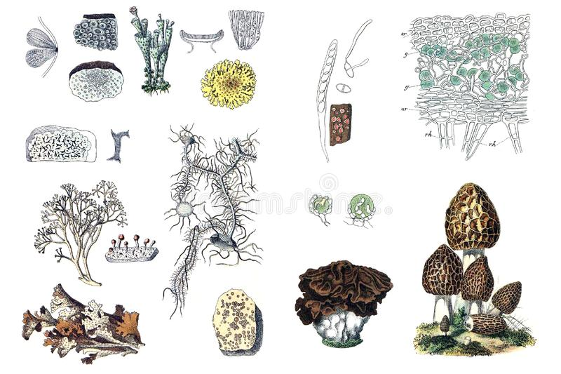 Illustrationer av växter royaltyfri illustrationer