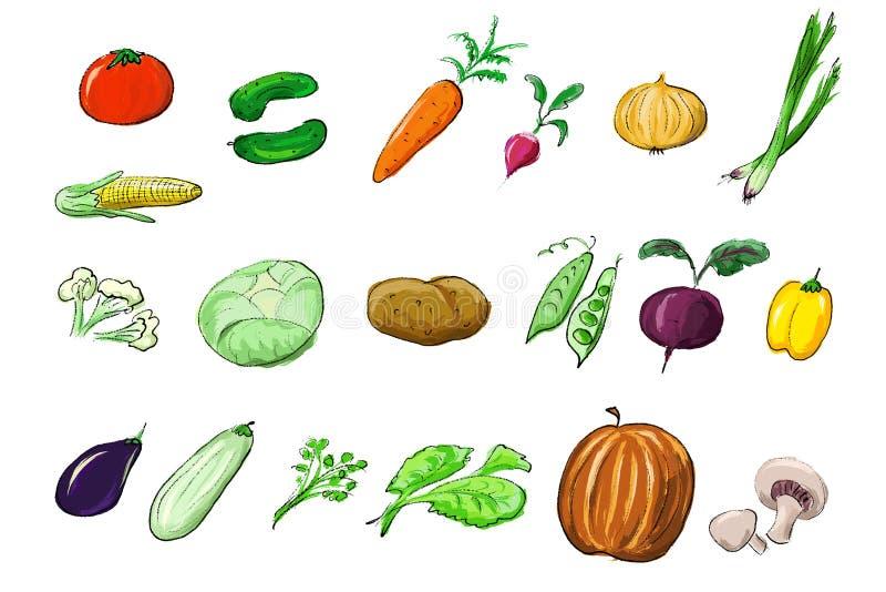 illustrationgrönsaker stock illustrationer