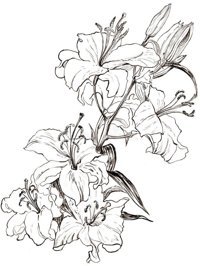Illustrationliljan blommar monokrom royaltyfria foton
