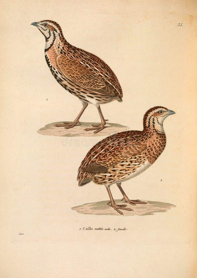 Illustrations of animal. stock photos