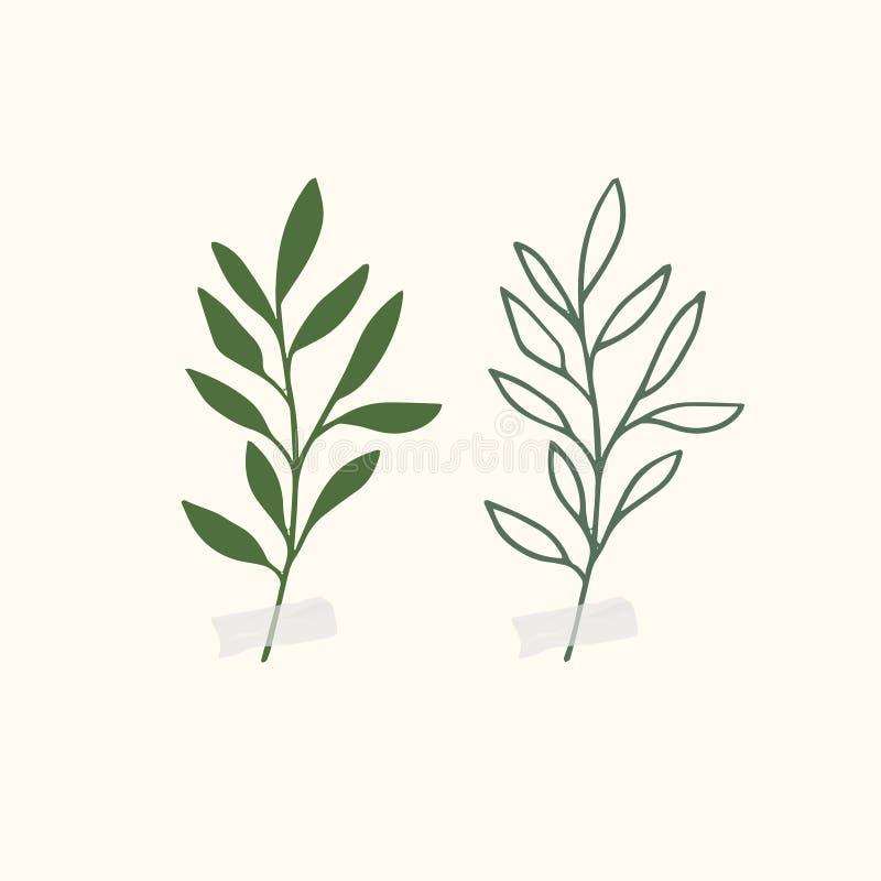 Illustrations botaniques de vecteur Clipart botanique Placez des branches vertes Éléments floraux de Herb Design illustration de vecteur