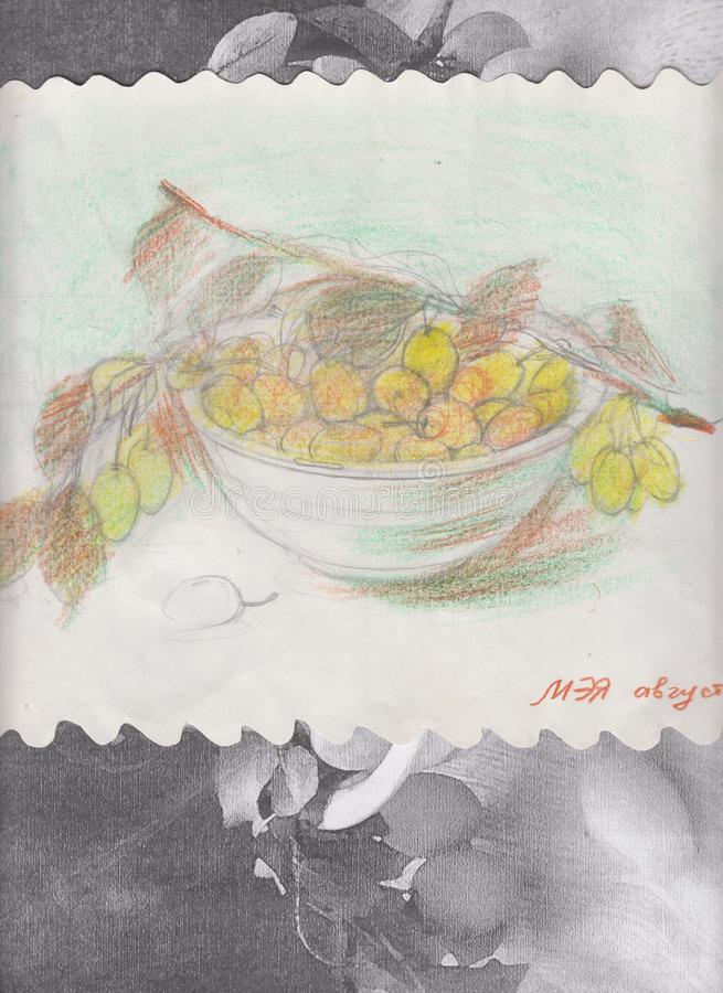 Illustrations and clip art. Drawing with watercolor pencils. Yellow plums from nature royalty free illustration