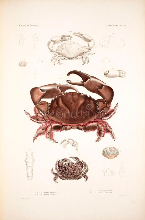 Illustrations d'animal images libres de droits