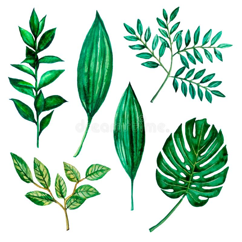 Illustrations d'aquarelle Feuilles vertes, herbes illustration stock