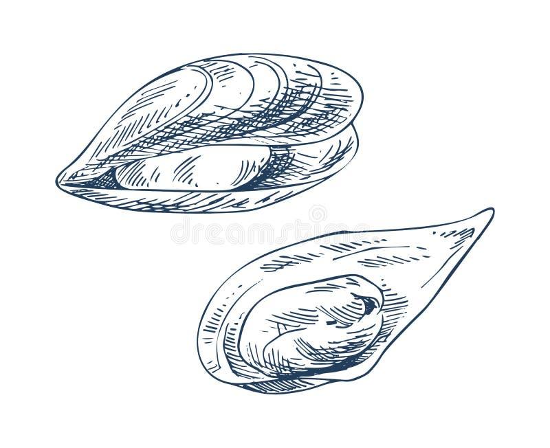 Illustrations de vecteur de moule et de fruits de mer illustration stock