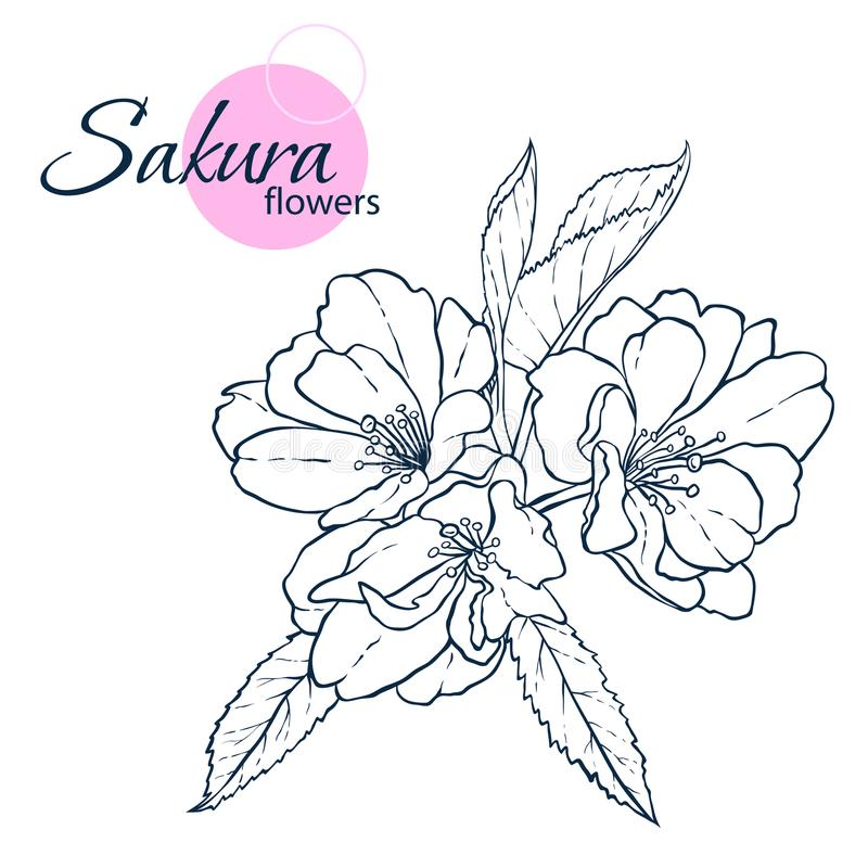 Hand drawn Japanese blossom sakura flowers. Line-art style illustration. Coloring book for adult and children. royalty free stock photo