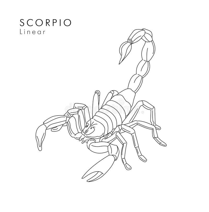 Illustrations- oder Tätowierungsskizzenhand des Skorpions lineare gezeichnet lizenzfreie abbildung