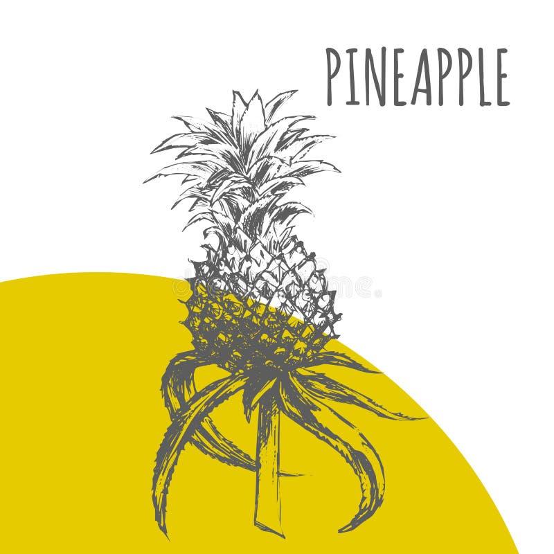 Illustrations-Skizzenanlage des Ananas- oder Ananasfruchtvektors botanische lizenzfreie abbildung