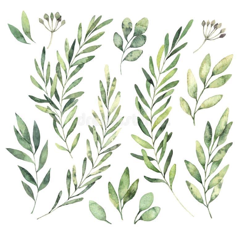 Illustrations tirées par la main d'aquarelle Clipart botanique Ensemble de g illustration stock