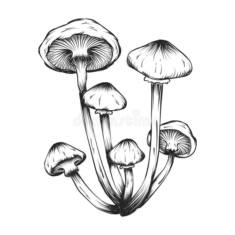 illustrations tirées par la main d'ensemble de champignons photo libre de droits