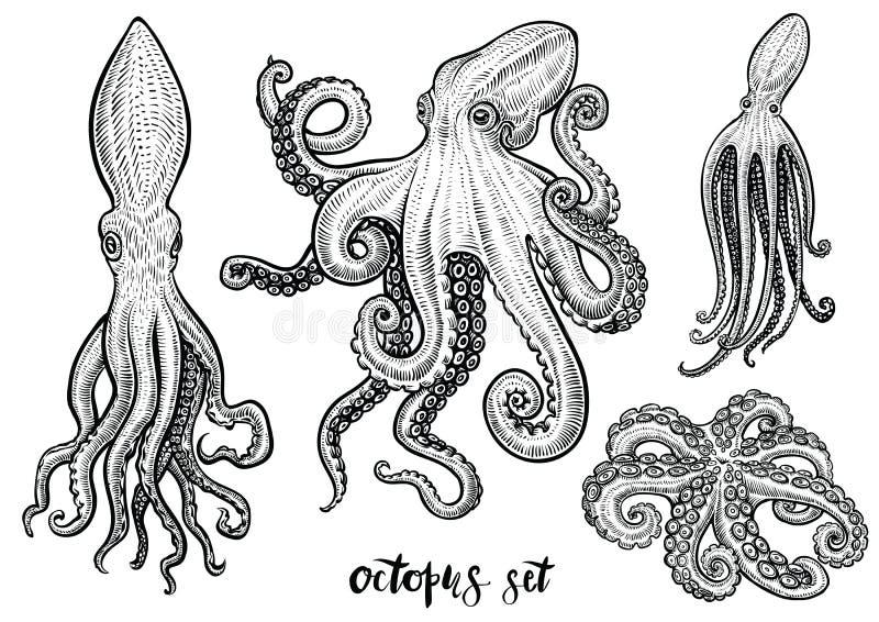 Illustrations tirées par la main de vecteur de poulpe Croquis noir de gravure d'isolement sur le blanc illustration stock