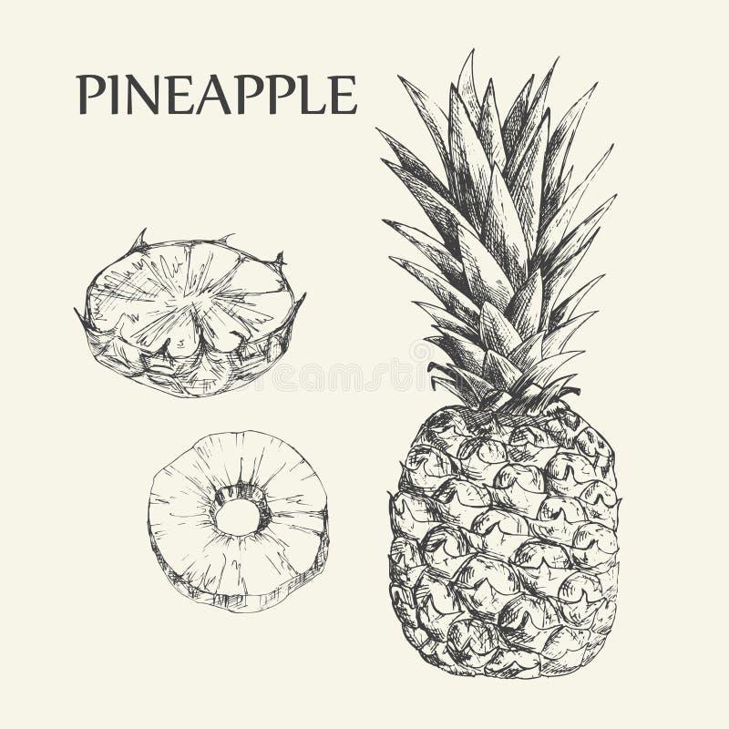 Illustrations tirées par la main des ananas Dessins exotiques de vecteur de fruit tropical d'isolement sur le fond blanc illustration de vecteur