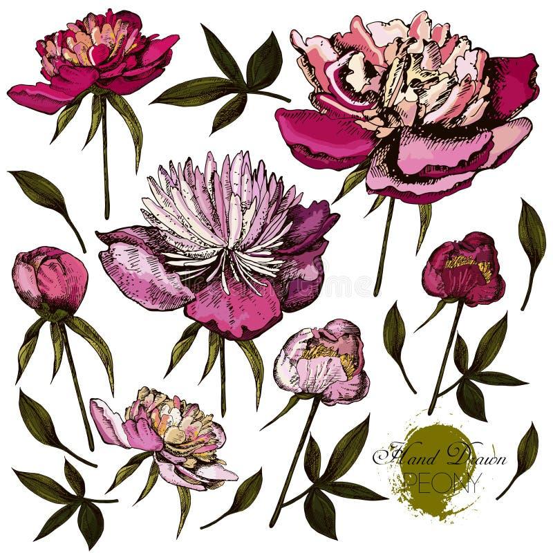 Illustrations tirées par la main gravées de fleuri illustration libre de droits
