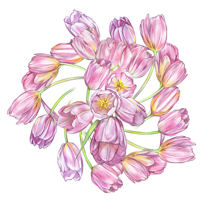 Download Illustrations Of Tulips Flowers. Perfect For Greeting Card Or Invitation. Background In Watercolor Style 8 March Holiday Stock Illustration - Image: 83703122