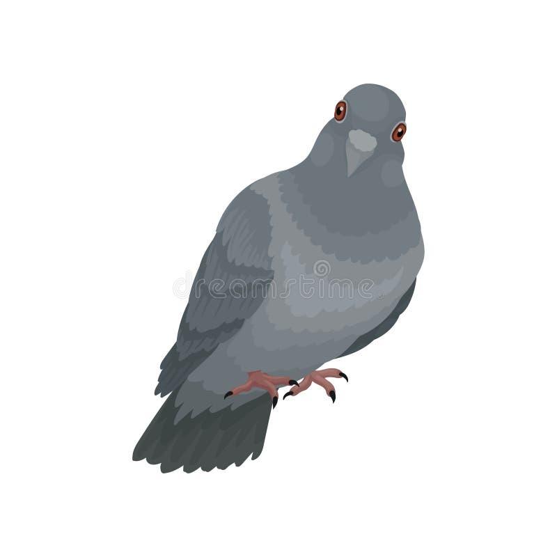 Illustrations urbaines grises mignonnes de vecteur de pigeon sur un fond blanc illustration libre de droits