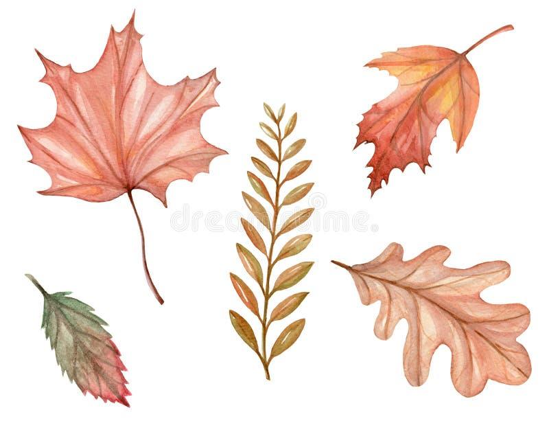 Illustrationsaquarellsatz Herbstlaub lizenzfreie abbildung