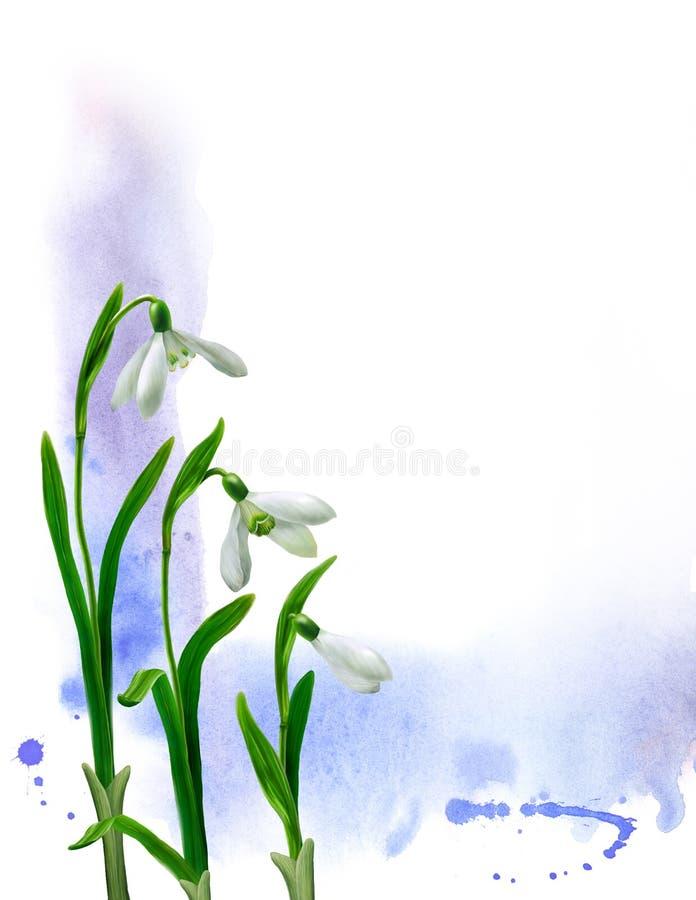 illustrationsnowdrops stock illustrationer