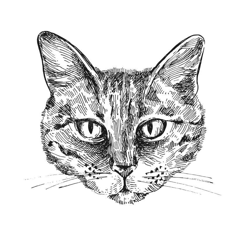 Illustrationsporträt der Katze lizenzfreie abbildung
